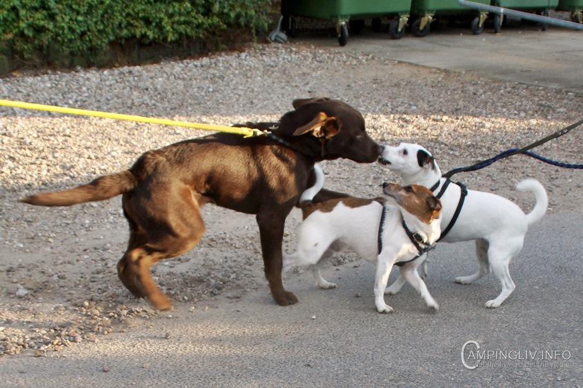 Gammelmark_Strand-Camping-hunde